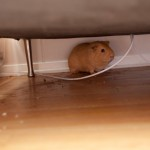 King found out what was going on, and hid himself under the sofa.. don&#039;t blame him