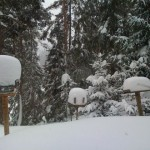 Picture taken outside the window at the cabin, looking a bird trays